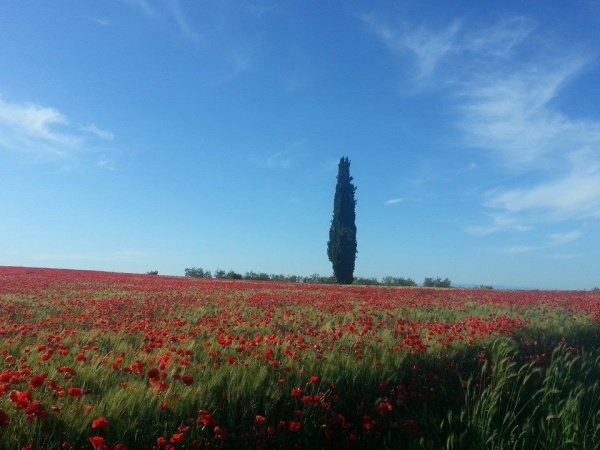 Terzo Pellegrinaggio Artusiano: 120 km, fino a Barletta.