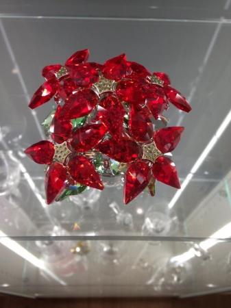 rosa di Natale