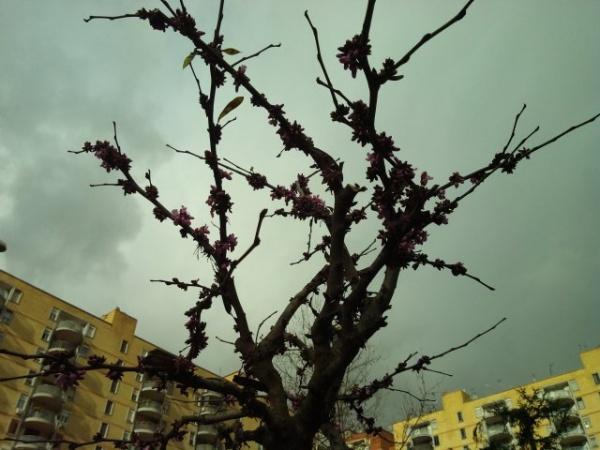 Scampia: pollice verde…speranza