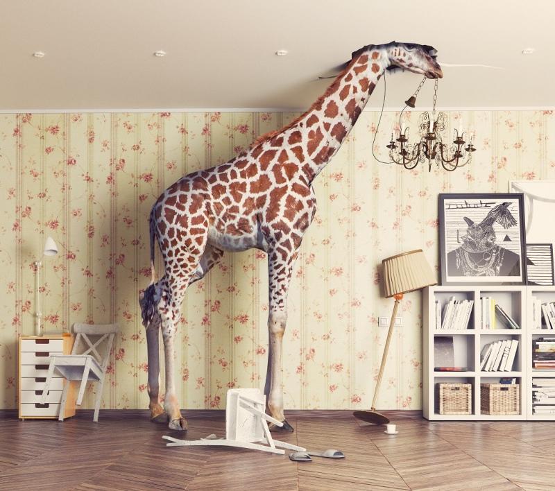 La giraffa di IN BOX dal vivo edizione 2017 Siena